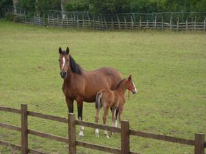 Milton Equestrian Centre, Milton Equestrian, Milton, Equestrian, Equestrian Centre, Riding Centre